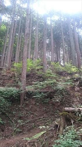 八重山トレイル5_R