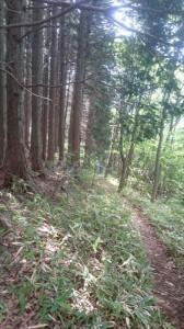 八重山トレイル7_R