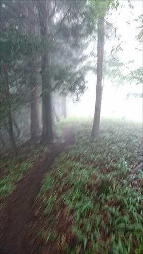 八重山トレイル6