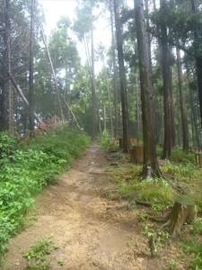 高尾山トレイルラン3